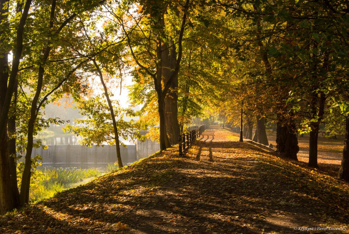 Złota jesień w Parku Miejskim w Kaliszu